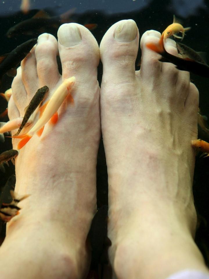 Rybie pedicure wiadomo ci for Fish foot massage