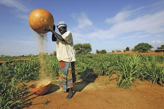 Millet farming in Nigeria [Britannica kids]