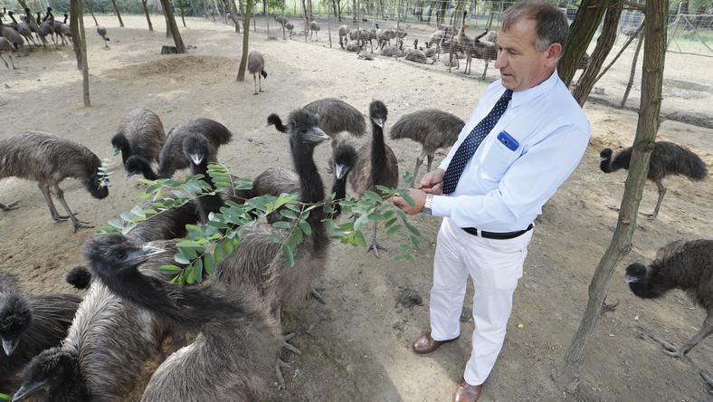 Milinki László polgármester gyakorta  látogatja az emukat,  és meg is eteti őket /Fotó: Fuszek Gábor