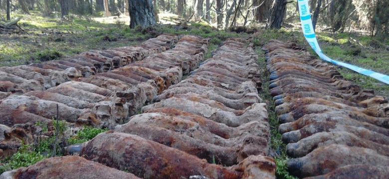 CBŚP: arsenał w lesie na Mazowszu – ponad 200 kg materiałów wybuchowych