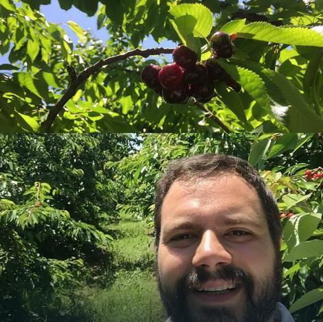 Organske trešnje iz centralne Srbije