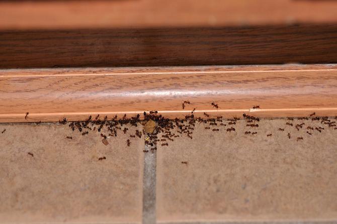 Sve sastojke imate u kući: Uz ove CAKE više nikada nećete imati mrave i paukove u kući