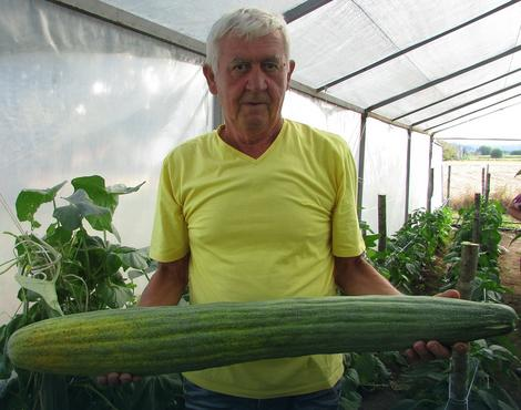 Dragoljub Đukić sa krastavcem od 7,5 kilograma