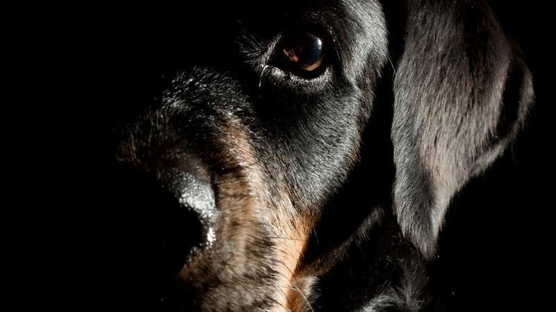 Zwierzęta ratują życie - czy to anioły?