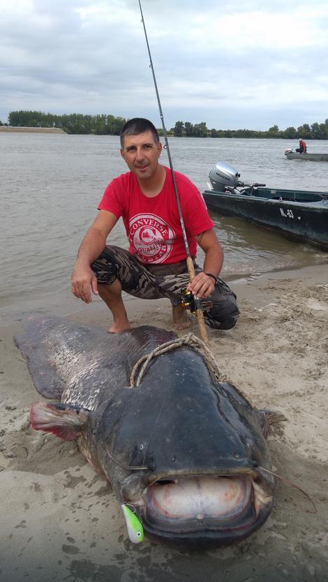 PECANJE /sportski ribolov-pecanje iz hobija / - Page 10 YNxktkqTURBXy9mY2I1NDA4YzhhN2ViY2E4NGJkYmFkZmFiZGExNTdjYS5qcGVnk5UCzQMUAMLDlQLNAdYAwsOVB9kyL3B1bHNjbXMvTURBXy8xZDc0Y2I0MTcwNTk1MDQzNjYyOWNhYmQ2MDZmNTBmNi5wbmcHwgA