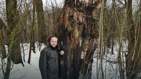 Zmajevo stablo