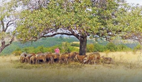 Goran Savkovićsa svojim stadom ovaca