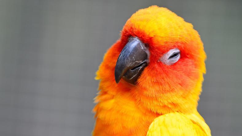 """Képtalálat a következőre: """"papagáj"""""""
