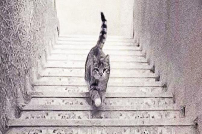 Da li se maca kreće uz ili niz stepenice?