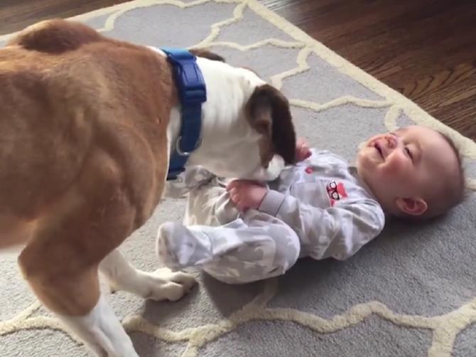 Svet je obišao snimak dva preslatka drugara:  Od ovog psa nema bolje dadilje!