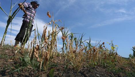 Vremenske nepogode uništile 20 odsto poljoprivredne proizvodnje
