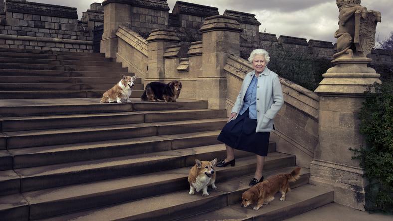 II. Erzsébet királynő és négy kutyája/Fotó:Northfoto