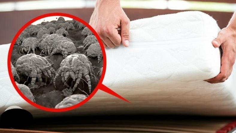 A legtöbb ágymatrac tele van penészgombával ede5934cea