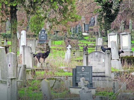 Staro groblje u Nišu