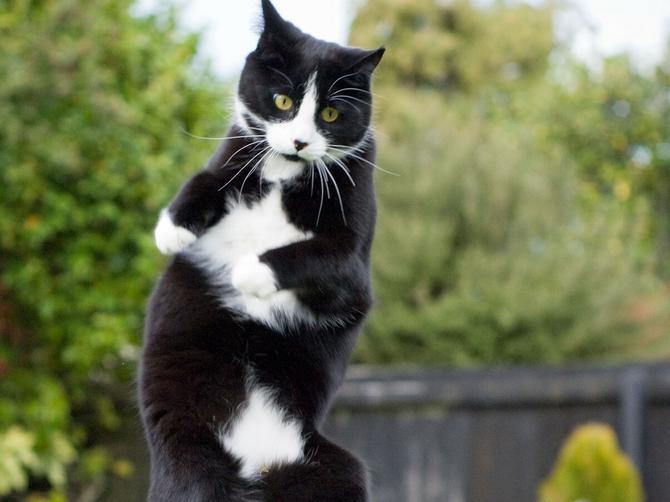 Mi zbog ove mačke PLAČEMO od jutros, ali od smeha!