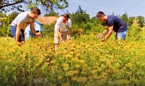 Još u staroj Jugoslaviji Jabukovac je imao otkupnu stanicu i sušaru lekovitog bilja, a sada su na livadama ponovo nikli zasadi nevena i smilja