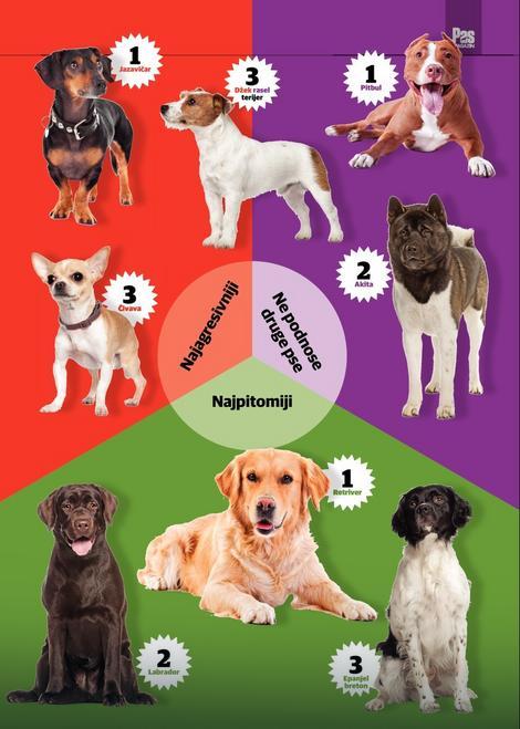 Najagresivniji psi pripadaju takozvanim malim rasama