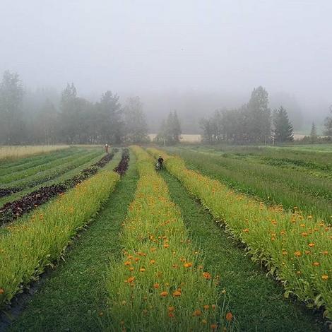Organska plantaža na Staroj planini