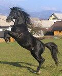 zdecydowanie konie:)