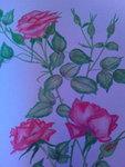 Róże-kredki ołówkowe