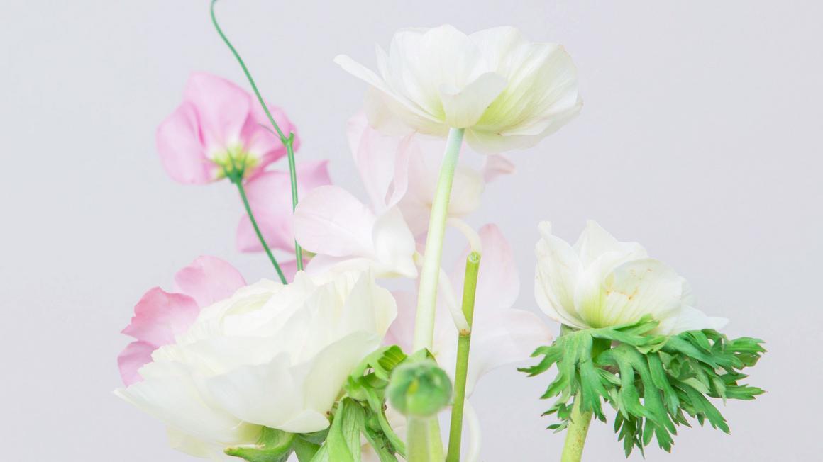 Pięć roślin o właściwościach pielęgnacyjnych