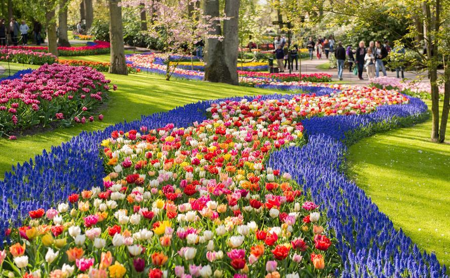 Keukenhof: największy ogród z kwitnącymi roślinami cebulowymi