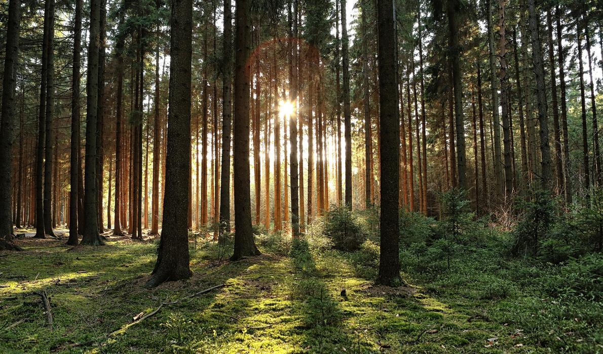 Wąwóz Myśliborski to idealne miejsce dla rzadkich roślin. Miliony lat temu były tu wulkany