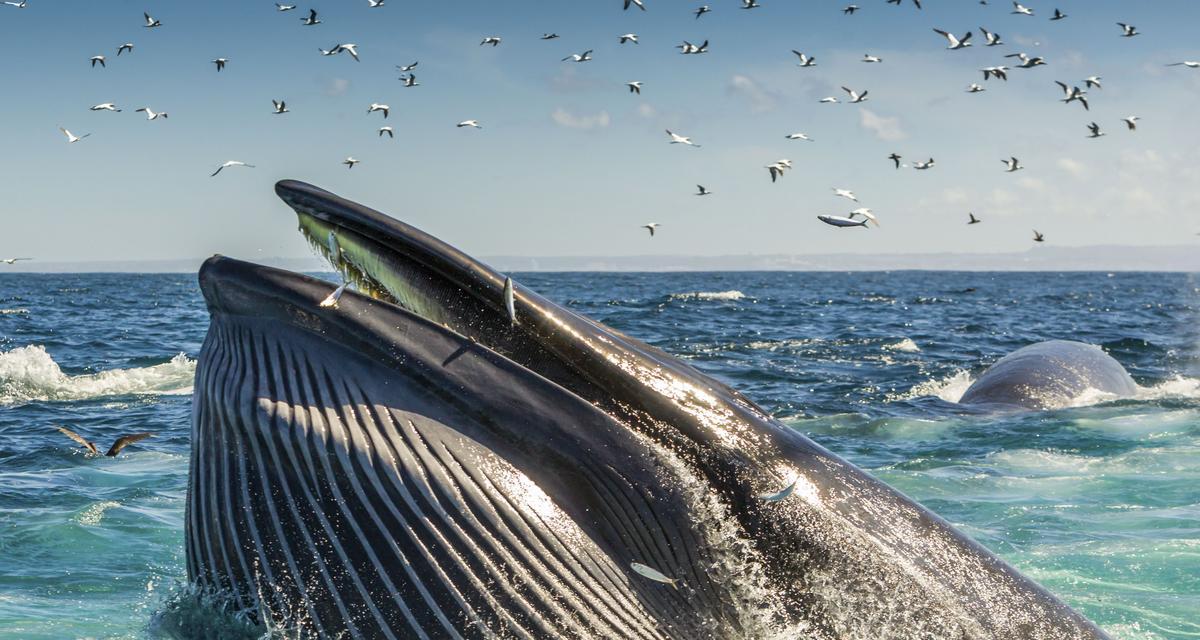 Morskie polowanie