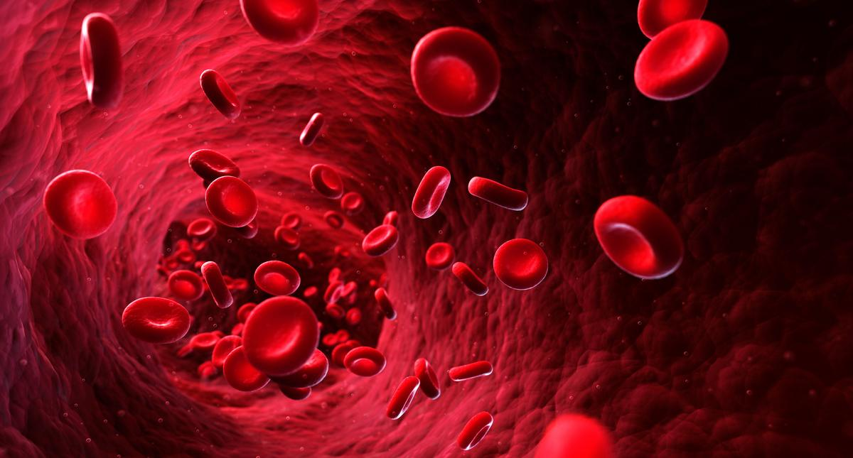 Human red blood cells, artwork