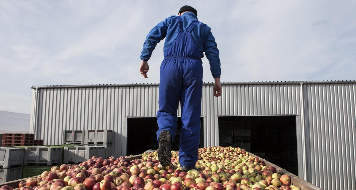 Polska zasypana jabłkami