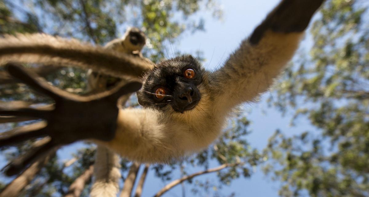 Skacząc z drzewa