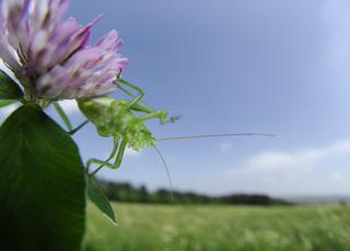 Świat bez insektów