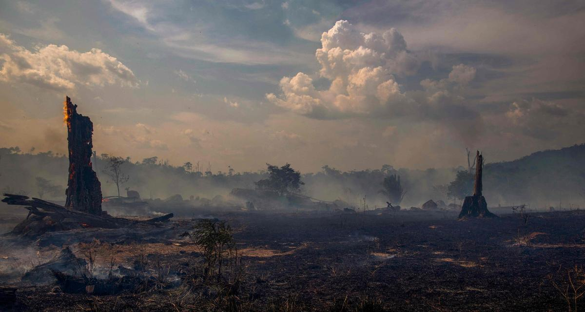 Amazońska apokalipsa