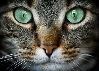 Kot podbija świat