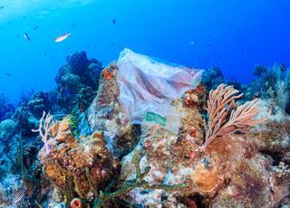 Chore korale