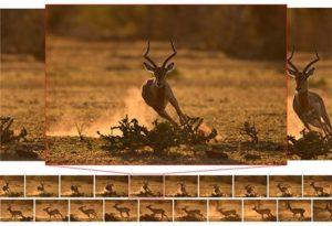 nikon_dslr_d500_10fps_200shots_wildlife--original[1]