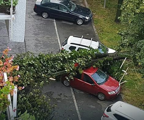 Drvo palo na automobile