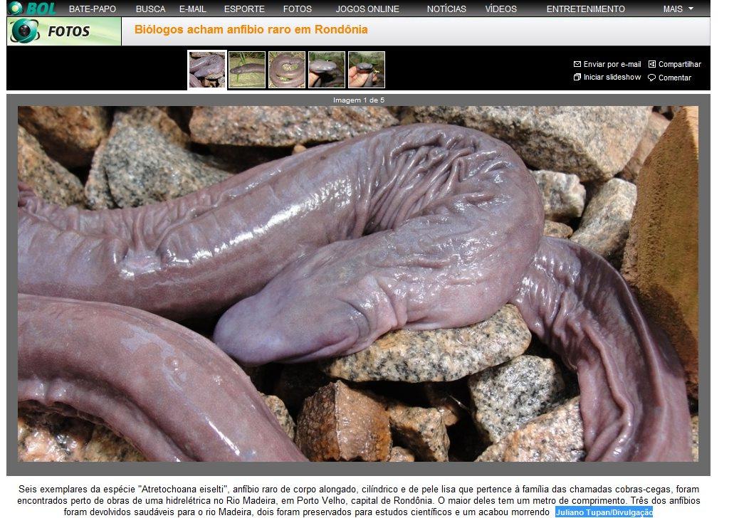 Dick ssanie penisa