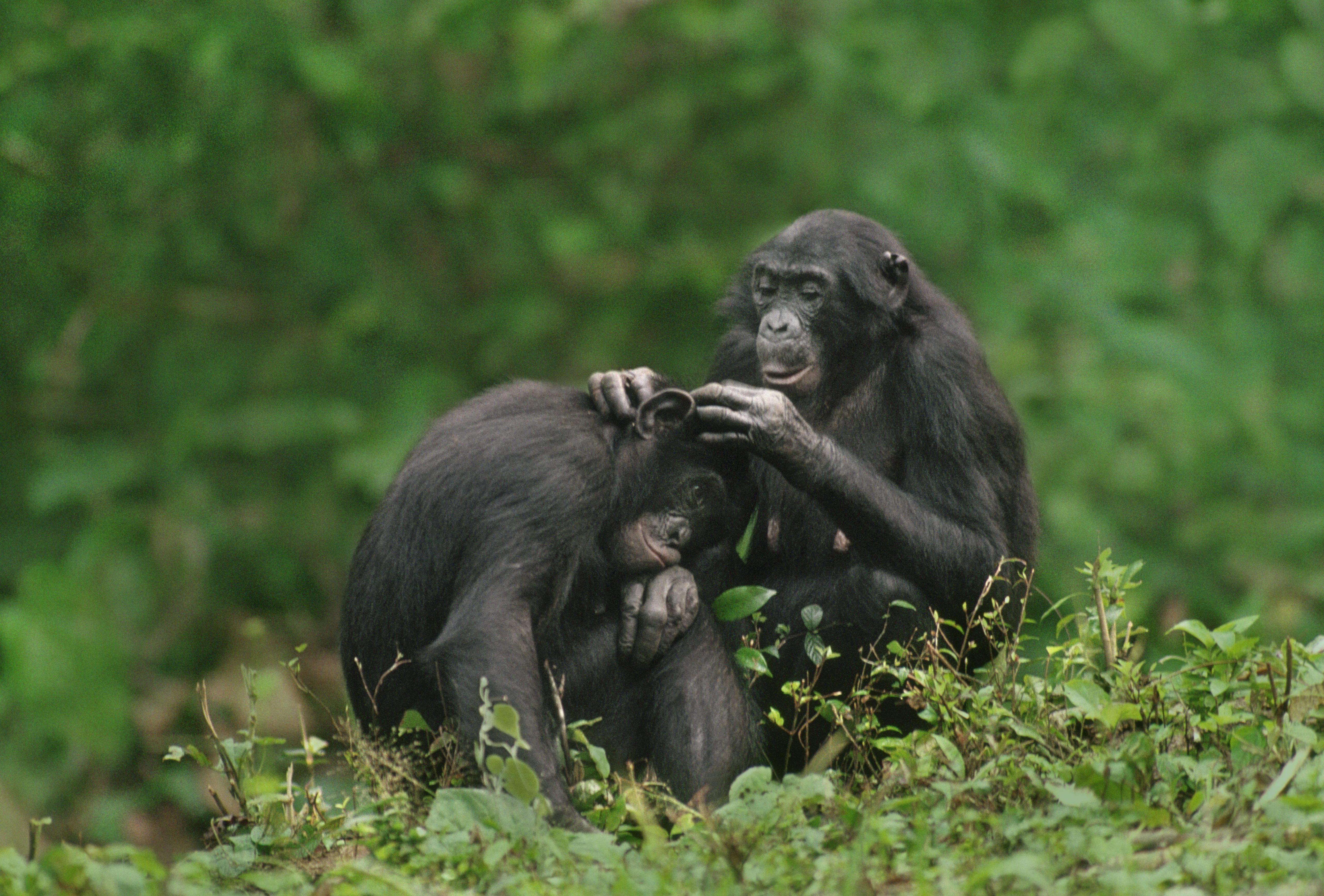 Filmy sex małpy