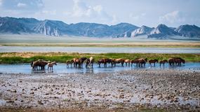 Mongolia - różne oblicza Gobi