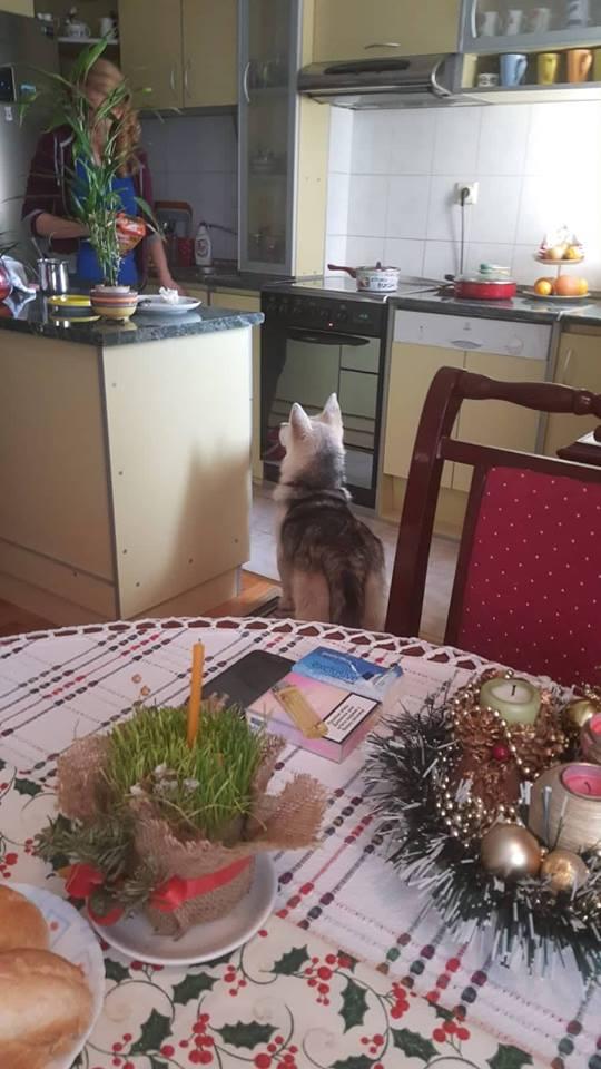 Aska je praznike proslavila u novom domu