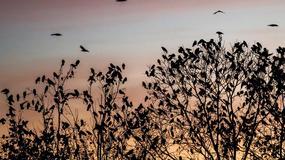 PRIZOR OD KOJEG ZASTAJE DAH Vatreno nebo nad Novim Beogradom zakitila jata ptica