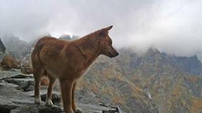 Niesamowite! Pies alpinista w Tatrach!