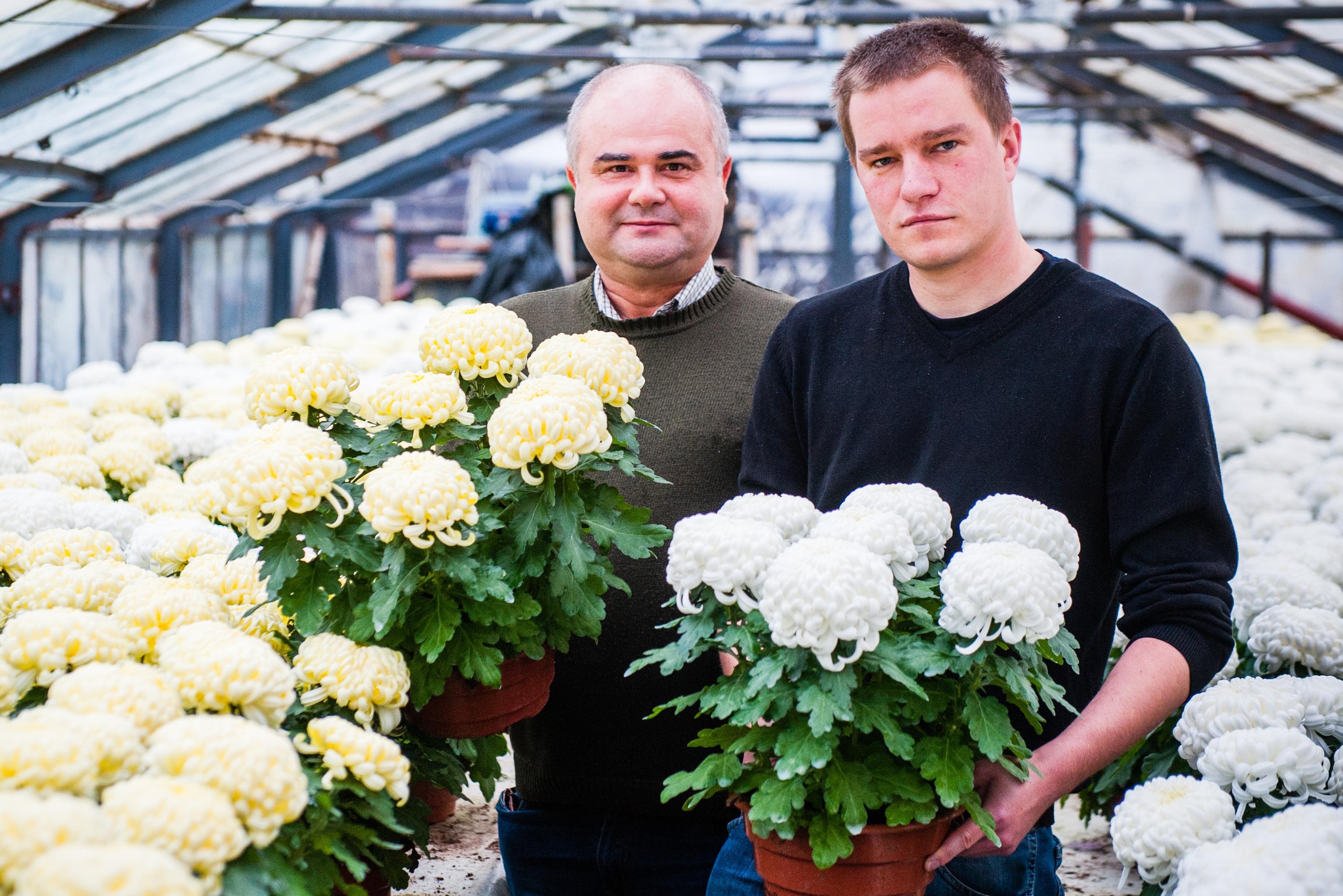 Kwiaty Na Wszystkich Swietych Jakie Kwiaty Wybrac Na Groby