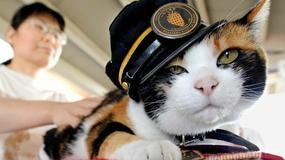 O kocie, który pracował na kolei