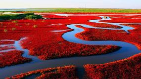 Zachwycająca Czerwona Plaża w chińskim Panjin