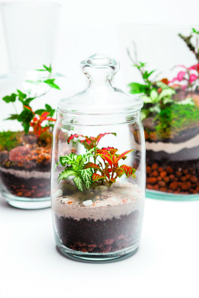 U tegli s poklopcem biljke zalivajte još ređe
