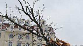 Skomplikowana operacja przesadzania drzewa
