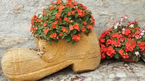 Jakie kwiaty sadzić na balkonie?