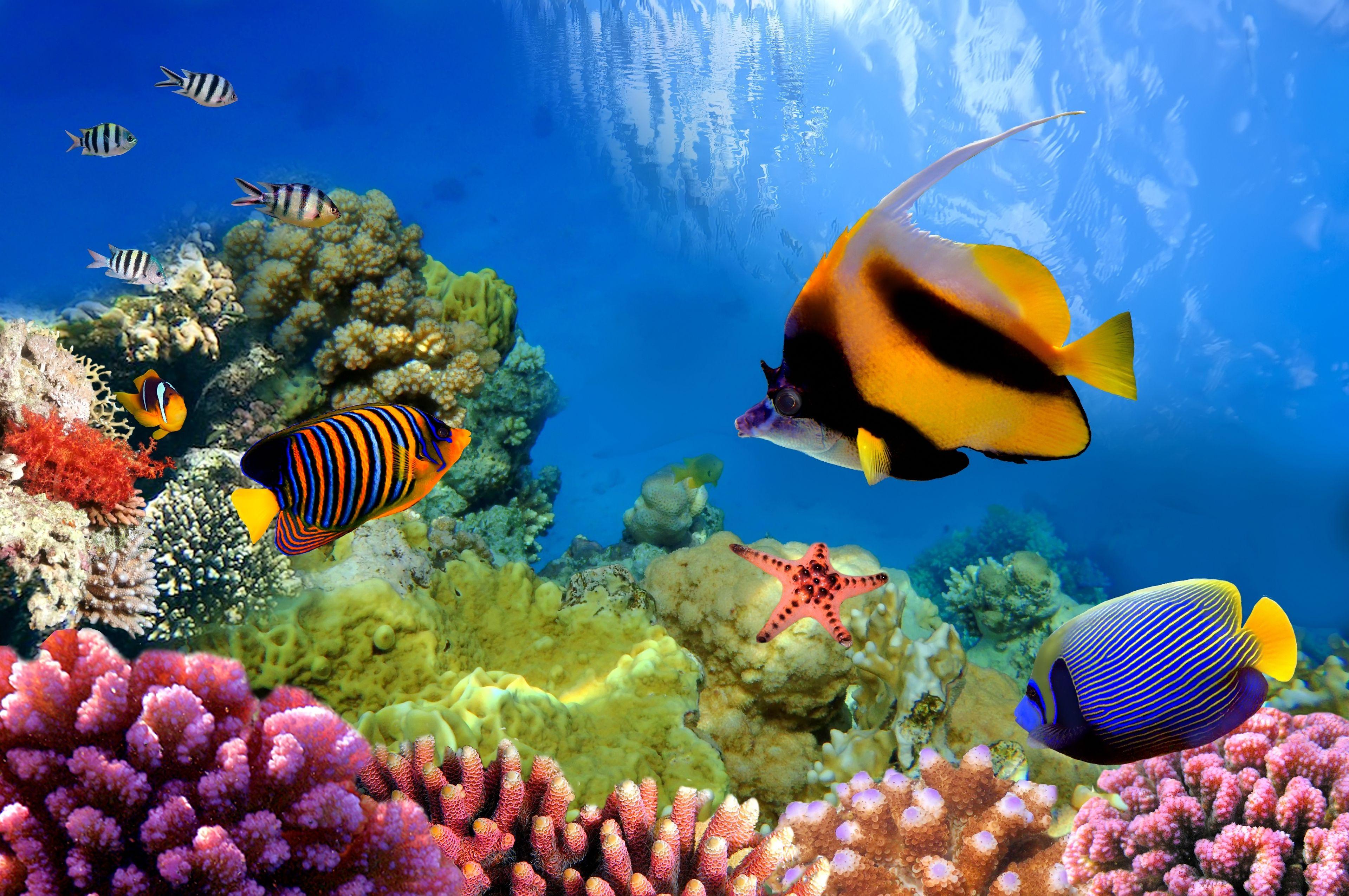 Znalezione obrazy dla zapytania tapety na pulpit koralowa rafa
